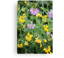 Partridge Pea Bouquet Canvas Print