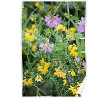 Partridge Pea Bouquet Poster