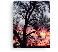 Sun setting behind desolate trees Canvas Print
