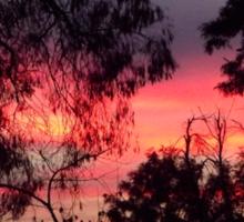 Sunset behind desolate trees 2 Sticker