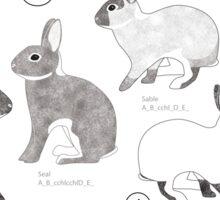 Rabbit Colour Genetics - Saturation Gene Sticker