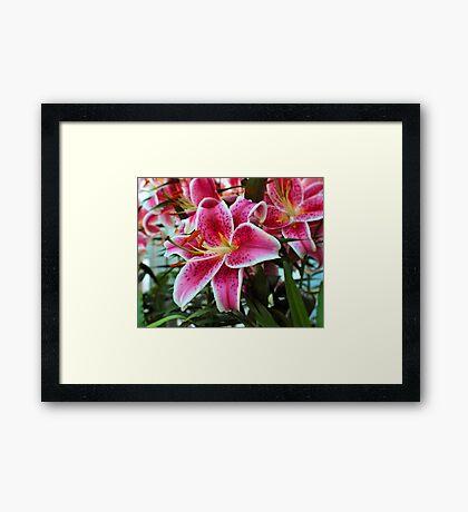 Lily In The Sunken Garden Framed Print