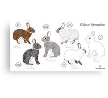 Rabbit Colour Genetics - Saturation Gene Canvas Print