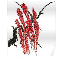A branch of a blossoming cherry. Red flowers of sakura Poster