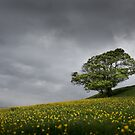 Lone tree on the Kent downs.  by Ian Hufton