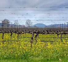 Vines And Wires by Agro Films