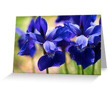 Blue Iris Patch Greeting Card
