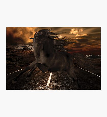 Black Stallion Photographic Print