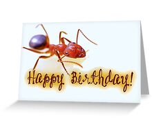 Happy Birthday - Ant Greeting Card