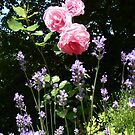 Roses and lavender by bubblehex08