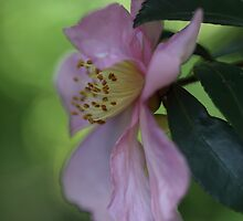 In The Pink. by Elisabeth Thorn