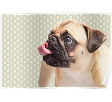 Puggy Pattern Poster