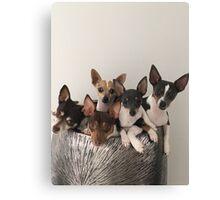fur family  Canvas Print