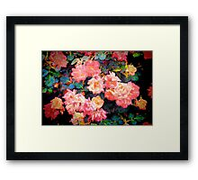 Rose 319 Framed Print