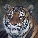 Bengal Tiger by Chris Cobern