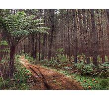 The Dark Dark Wood - Penrose State Forest NSW Australia Photographic Print