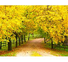 Follow the yellow leafed road - Exeter NSW Australia Photographic Print