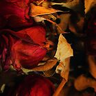 Hard Colored Roses by rebeccaholbrook