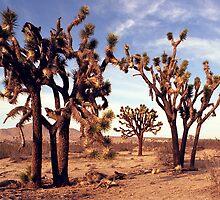 A Joshua Tree Grove by wolftinz