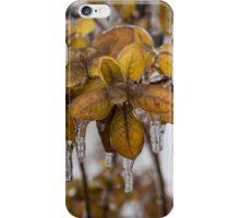 Ice Storm 2013 - Frozen Azalea Leaves  iPhone Case/Skin