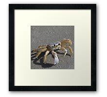 I'm a little crabby Framed Print