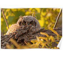 Hiding Owlet Poster