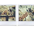 Giraffe Polaroids by Indea Vanmerllin