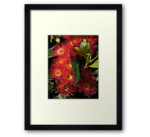 Blossom, Australian, Eucalyptus, ficifolia. Framed Print