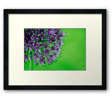 Bursts of spring Framed Print
