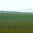 Fields of Green by Alan Robert Cooke