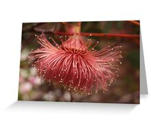 Eucalyptus rameliana #2 Greeting Card