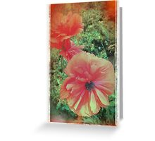 Portrait of a Poppy  Greeting Card