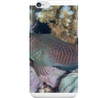 Red-streaked Blenny iPhone Case/Skin