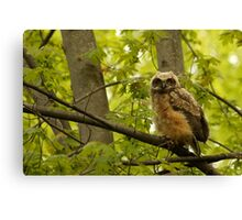 Among the maples Canvas Print