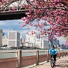 Riding Under the Cherry Blossoms by W. Lotus