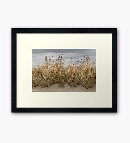Sea Grass and Sand Framed Print