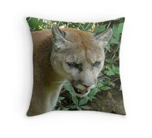 Cougar/Puma~ Throw Pillow