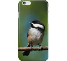Black Capped Chickadee Perched on a Branch iPhone Case/Skin