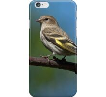 Pine Siskin Perched on a Branch iPhone Case/Skin