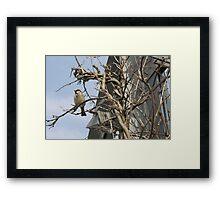 Bird In The Tree Framed Print