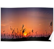 Marsh Sunset Poster