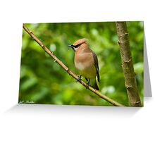 Cedar Waxwing Gathering Nesting Material Greeting Card