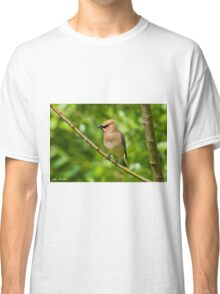 Cedar Waxwing Gathering Nesting Material Classic T-Shirt