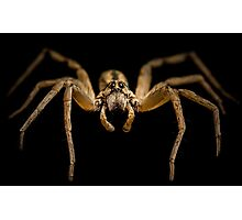 Grandpa Spider Photographic Print