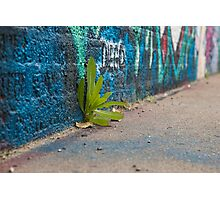 Green on a Street Photographic Print
