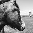 Horse Profile by Dfeivor