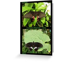 Common Mormon Butterfly (Asia) Greeting Card