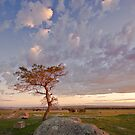 Dog Rocks Sunset. by ImagesbyDi