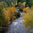 Styx River, Glenora, Tasmania by clickedbynic