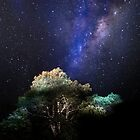 My Starlight Garden by Clare Colins